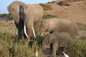 Amboseli23 1