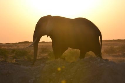 Amboseli23 2
