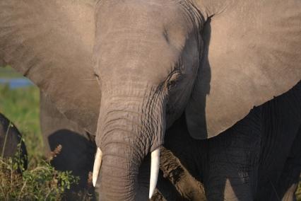Amboseli23 3